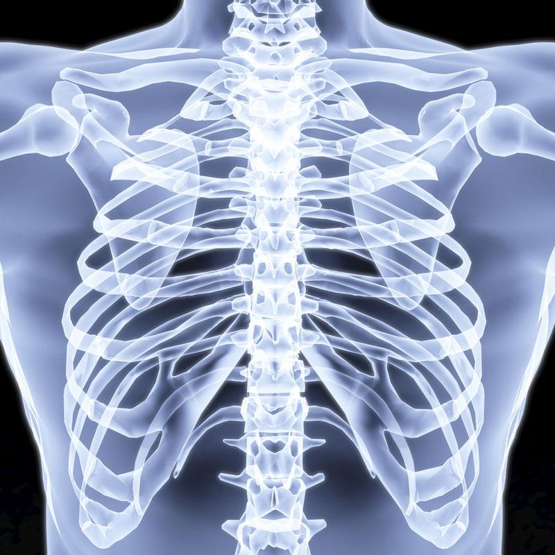 строение всех органов человека картинки