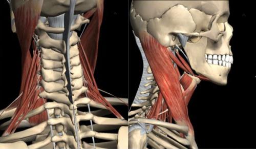 компьютерная томография гортани