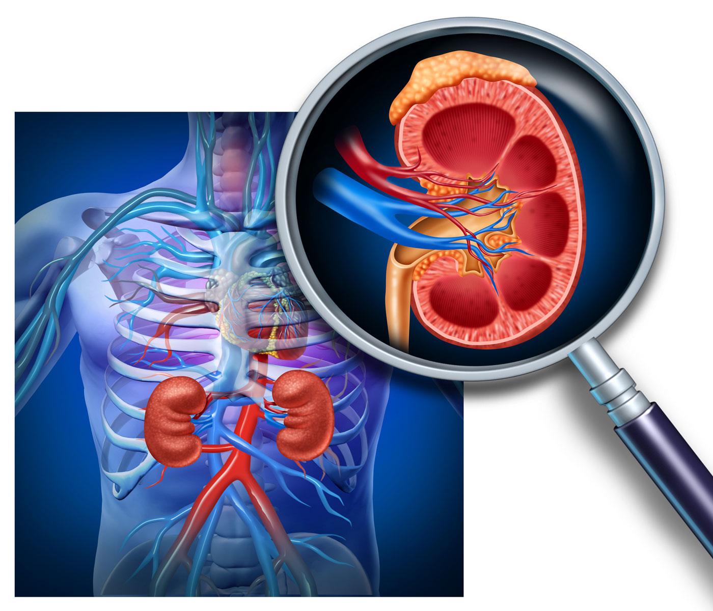 Подготовка к уздг артерий почек